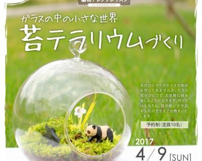 植物アレンジレッスン_1苔テラリウム