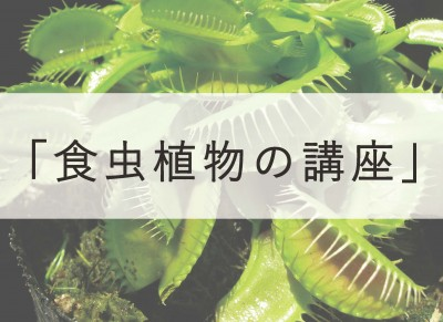 食虫植物の講座アイキャッチ