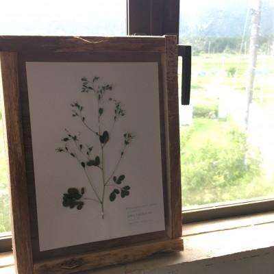 植物標本づくり/UGA-RINA
