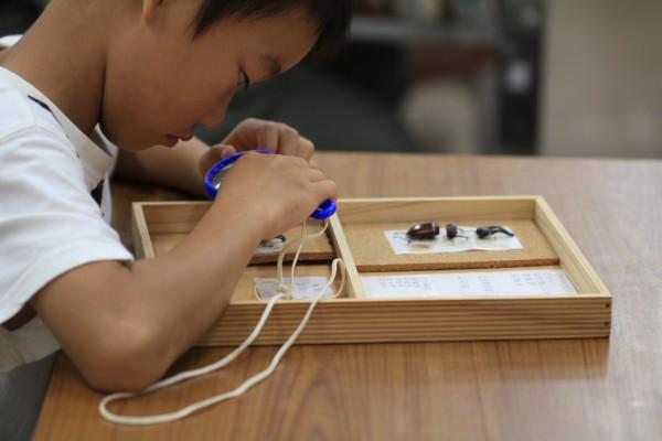 昆虫の標本づくり教室