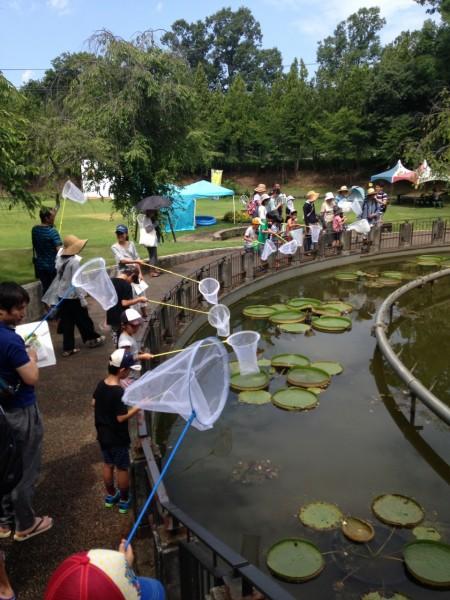 植物園の生き物観察会