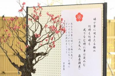 春を告げる盆梅展