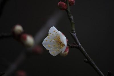 雪月花 (1)
