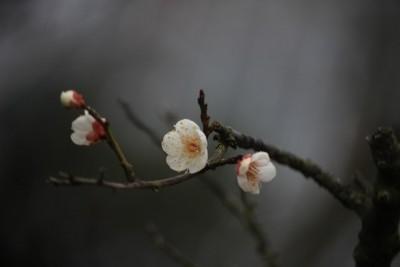 雪月花 (2)