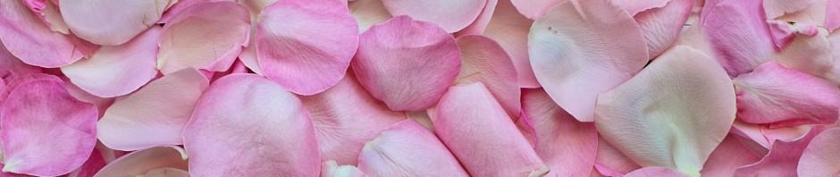 rose-petals-3194062_1920