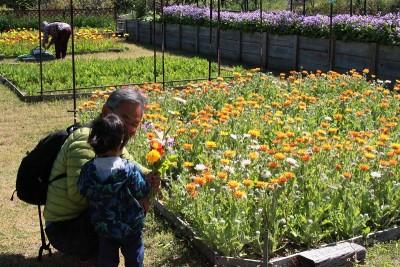s-花摘み園