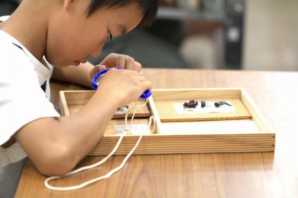 s-昆虫の標本づくり教室