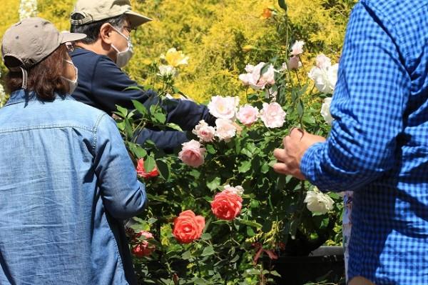 09.バラの花摘み園
