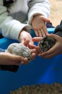 s-移動動物園