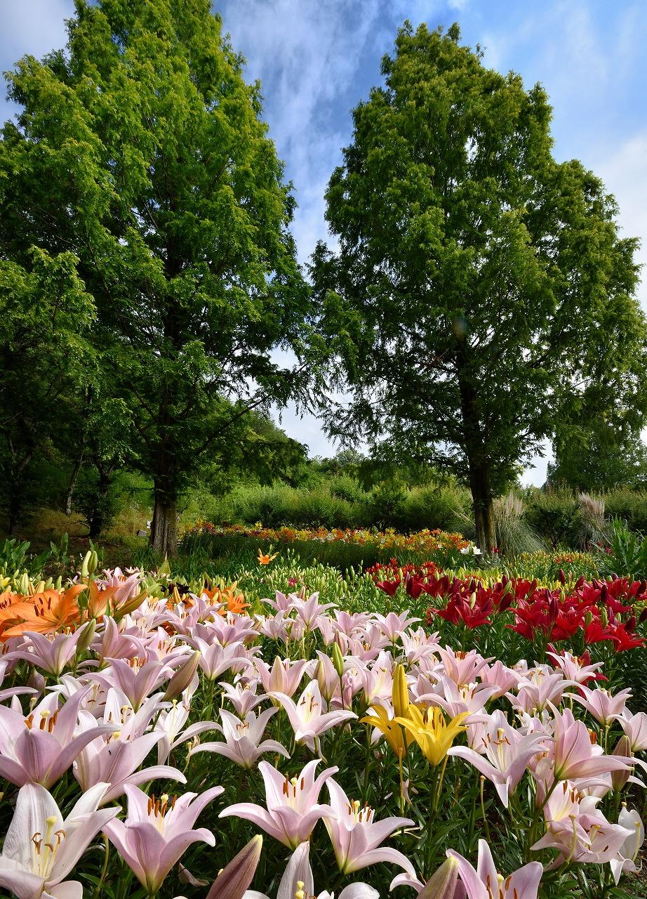 原版_2020④-3優秀賞「六月の花園」