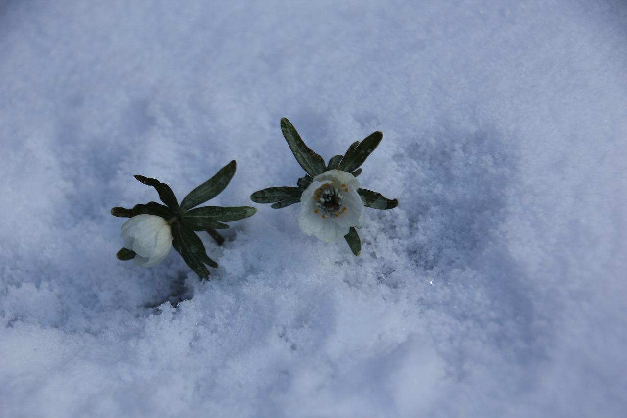 原版_2020④-5優秀賞「梅園のたもとの雪化粧」