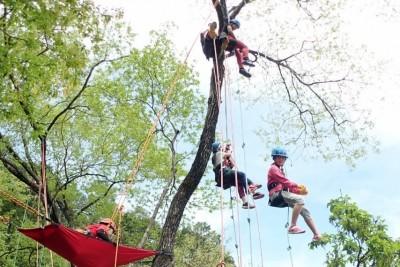 Tree climbing3