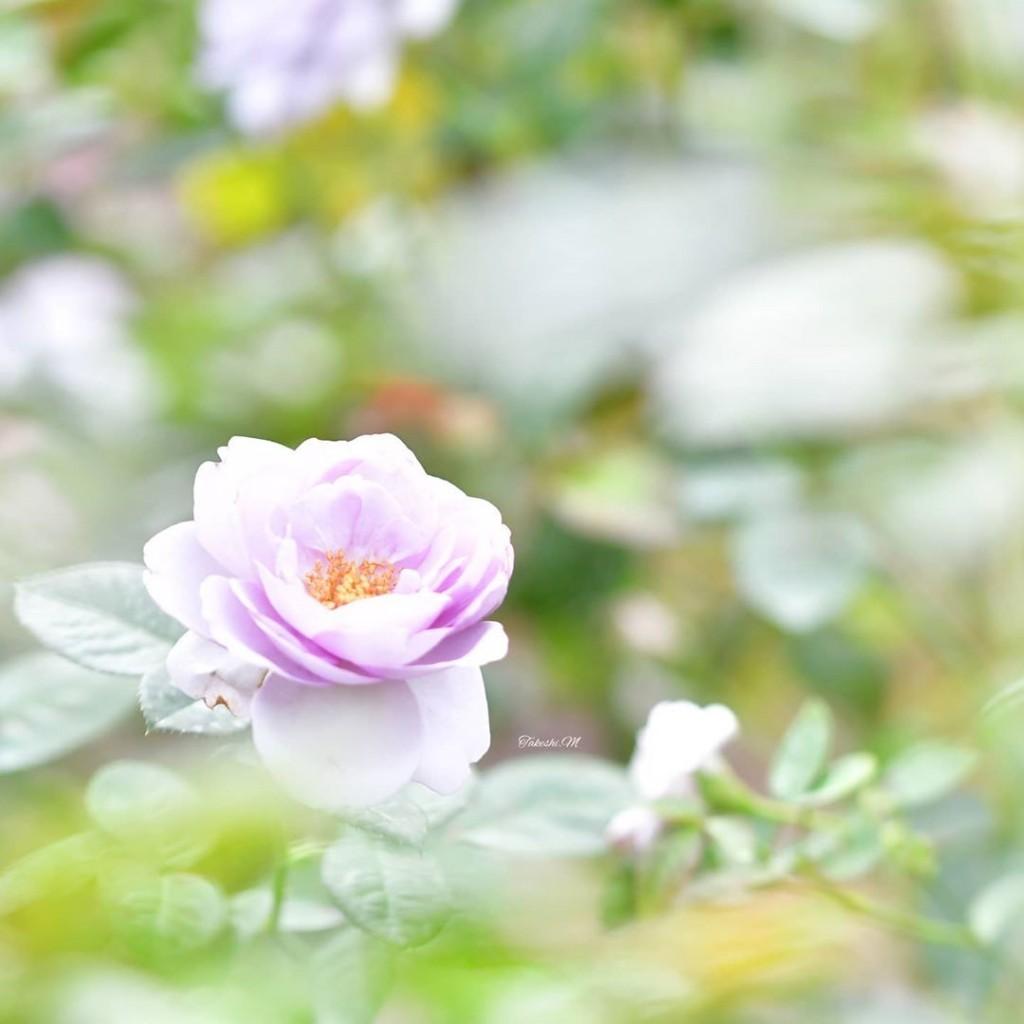 06【佳作3】06.2020_0923_takeshi_m_photo